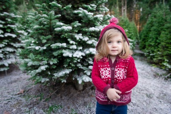 Macks Christmas Tree Hunt-10