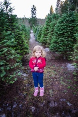 Macks Christmas Tree Hunt-11