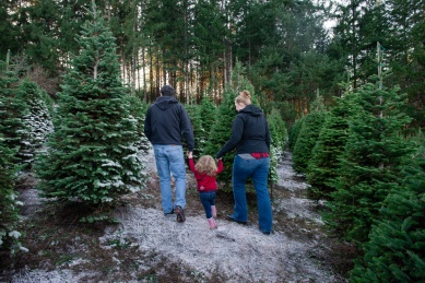 Macks Christmas Tree Hunt-5