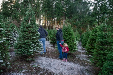 Macks Christmas Tree Hunt-6
