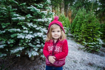 Macks Christmas Tree Hunt-8