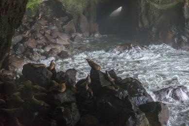 Sea Lion Caves