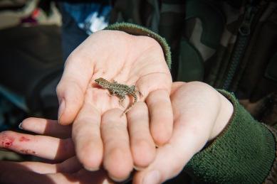 Lucian found a lizard!