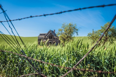 Old Nelson Homestead - Barbed Wire1