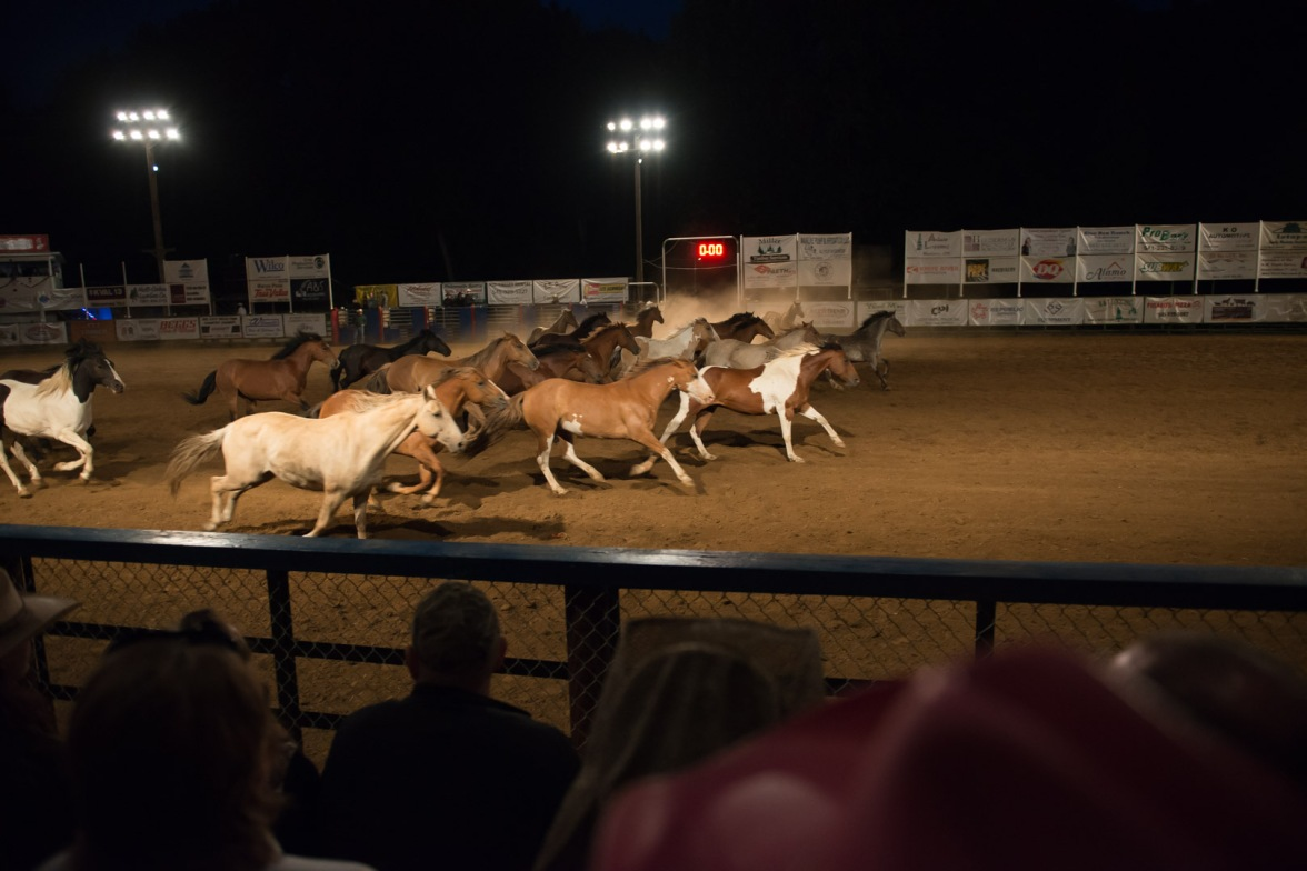 Philomath Frolic & Rodeo 2016-50