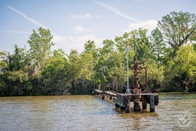 Louisiana Swamp Tour-16