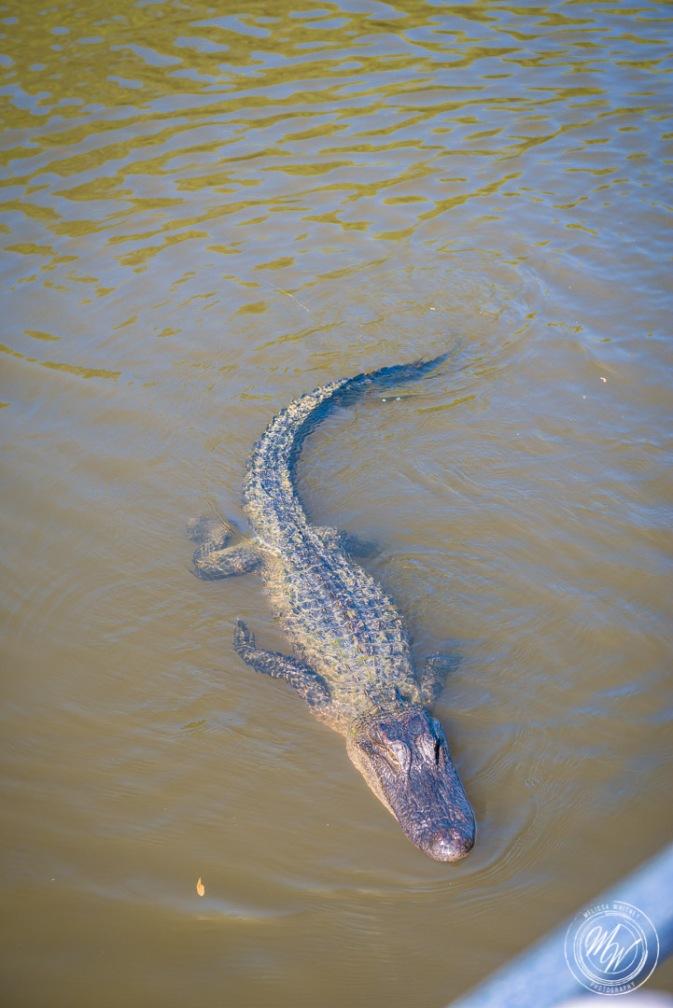 Louisiana Swamp Tour-23