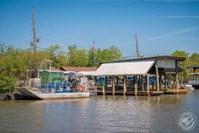 Louisiana Swamp Tour-40