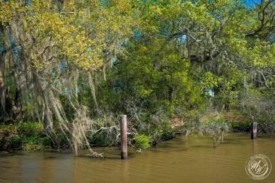 Louisiana Swamp Tour-8