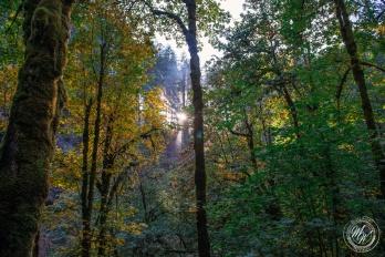Silver Falls October 2018-20
