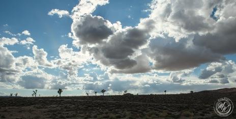 Desert silhouettes.
