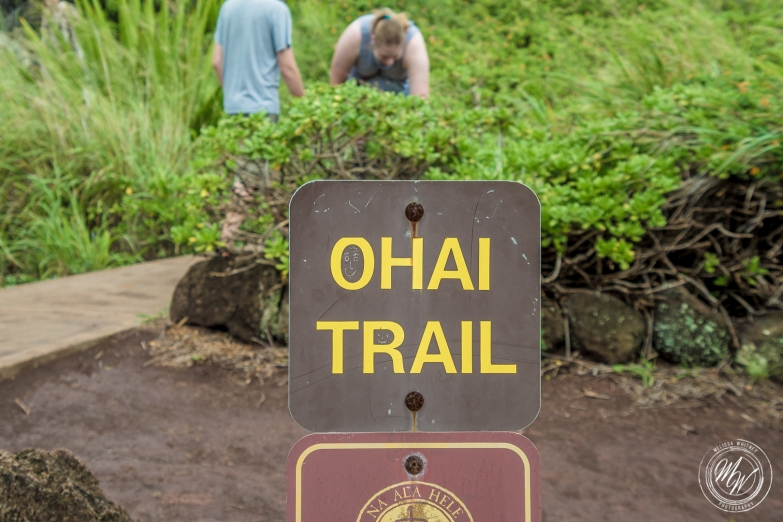 Blow Hole, Ohai Trail, Honalua Trail-7